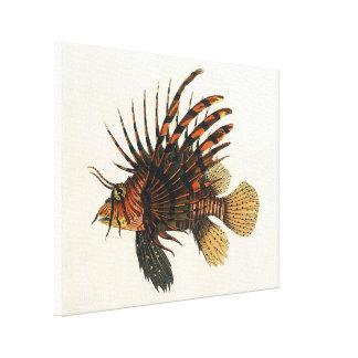 Peixes do Lionfish do vintage, animal marinho da