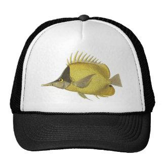 Peixes do vintage, Chelmon tropical amarelo Boné