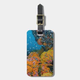 Peixes entre o recife de corais etiqueta de bagagem