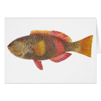 Peixes - peixes Carmesim-Unidos do papagaio Cartão Comemorativo