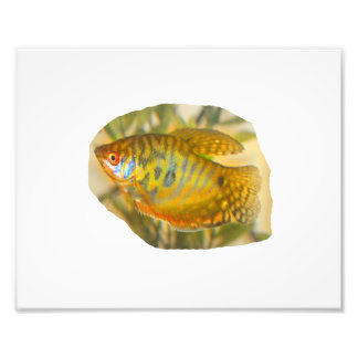 Peixes saturados dourados do aquário da opinião la fotos
