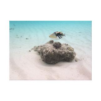 Peixes Snorkeling do coral das aventuras de