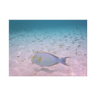 Peixes tropicais do coral da lagoa de Maldives do
