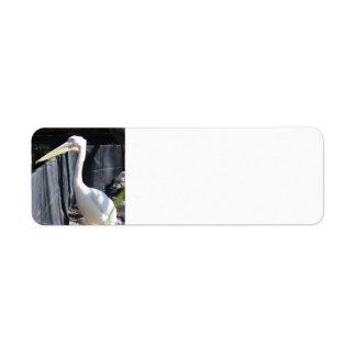 Pelicano do albino etiqueta endereço de retorno