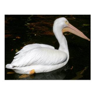 Pelicano no jardim zoológico de Birmingham Cartão Postal
