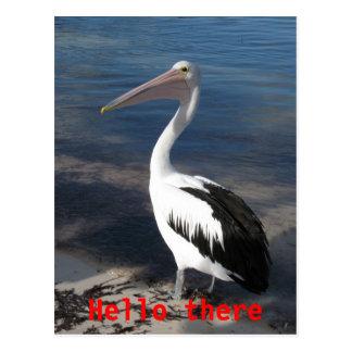 Pelicano olá lá cartão cartao postal