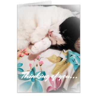 Pensamento de você cartão com fotos do gato