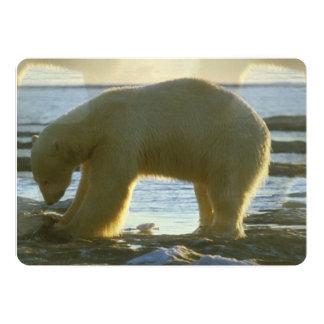 Pescando o urso polar convite 12.7 x 17.78cm