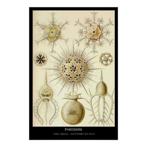 Phaeodaria - der Natur da placa 1-Kunstformen Impressão