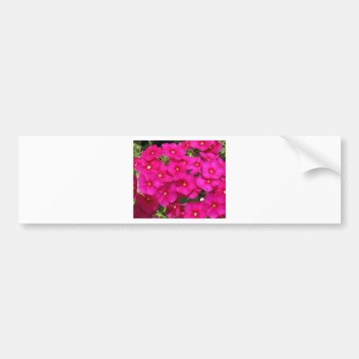 Phlox das flores adesivo