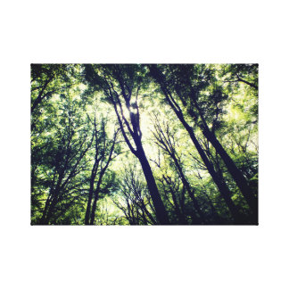 Photography of a forrest