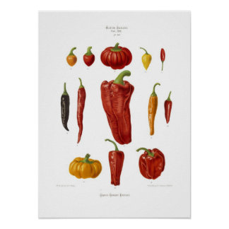 Pimentas Poster