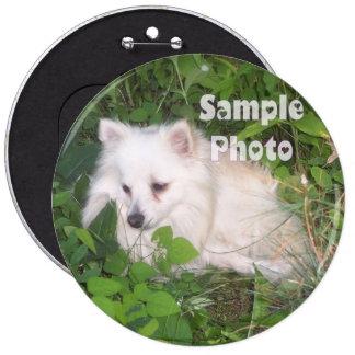 Pin COLOSSAL do botão da foto do animal de estimaç Botons