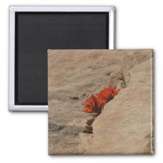 Pincel indiano nas rochas ímã quadrado