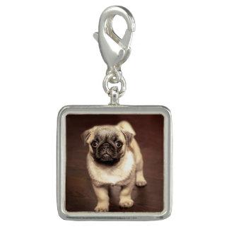 Pingente Pug bonito do filhote de cachorro, cão, animal de