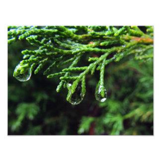 Pingos de chuva em um ramo de árvore (#2) foto