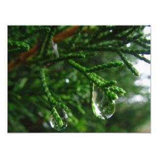 Pingos de chuva em um ramo de árvore impressão de foto