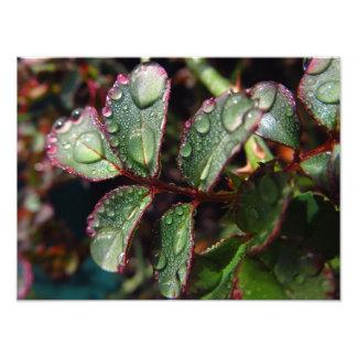 Pingos de chuva nas folhas cor-de-rosa da árvore impressão de foto