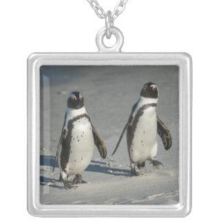 Pinguim africano (demersus do Spheniscus) 2 Colar Banhado A Prata