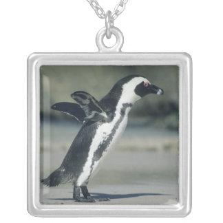Pinguim africano, (demersus do Spheniscus), vindo Colar Banhado A Prata