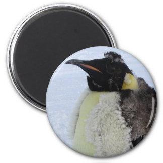 Pinguim de imperador Molting Ímã Redondo 5.08cm