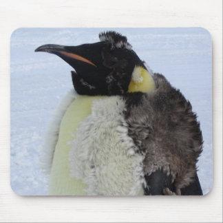 Pinguim de imperador Molting Mouse Pad