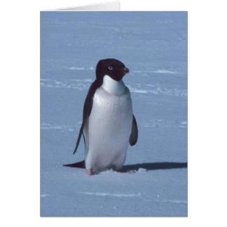 Pinguim solitário na neve na neve cartão comemorativo