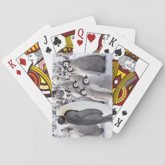 Pinguins de imperador - cartões de jogo jogos de baralhos
