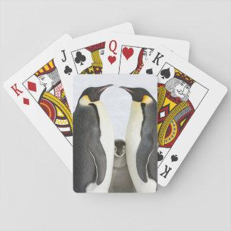 Pinguins de imperador com pintinho - cartões de jogo de baralho