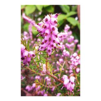 Pinho cor-de-rosa papelaria