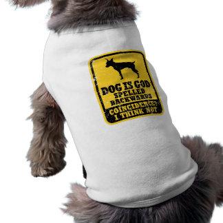 Pinscher diminuto roupas para pet