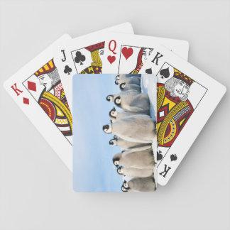 Pintinhos do pinguim de imperador - cartões de cartas de baralho