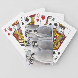 Pintinhos do pinguim de imperador - cartões de jogos de baralhos