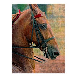 Pintura do falso de Saddlebred Cartão Postal
