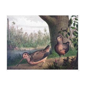 Pintura do vintage dos pássaros de jogo das impressão em tela
