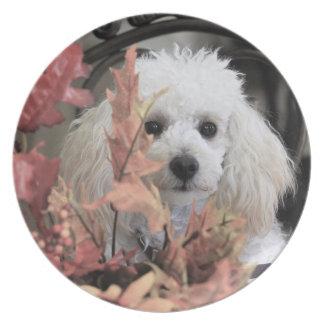 Placa da melamina do cão do pugilista da acção de prato