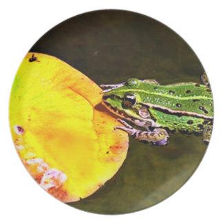Placa de observação do sapo do comensal prato