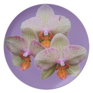 Placa - orquídea prato de festa