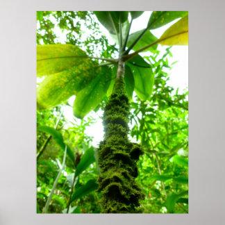 Planta havaiana do Ti Pôster