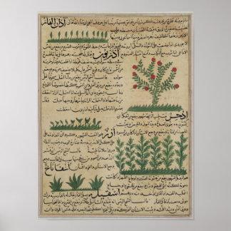 Plantas botânicas, ilustração 'do pôsteres