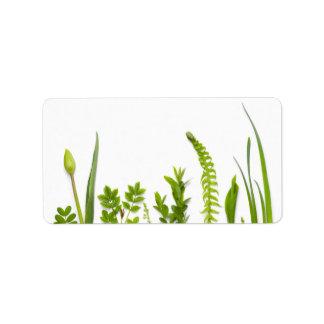 Plantas verdes isoladas no fundo branco etiqueta de endereço