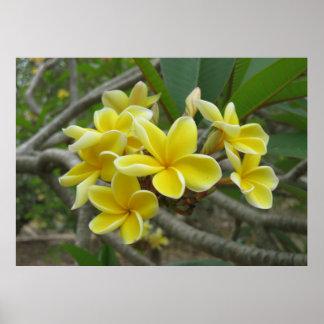 Plumeria havaiano poster