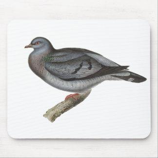 Pombo ou pomba conservada em estoque do estoque mousepad