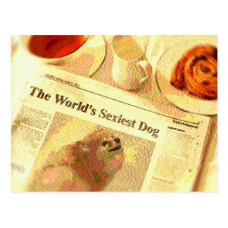 """Pomeranian, o cão o mais """"sexy"""" do mundo cartão postal"""