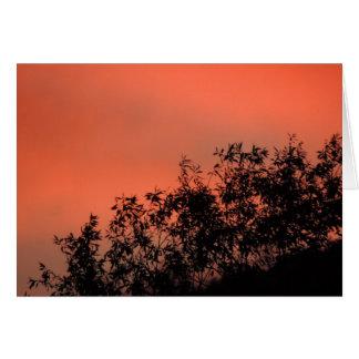 Por do sol através das folhas cartão de nota