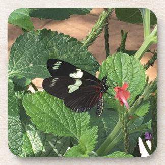 Porta-copo Beleza preto e branco da borboleta