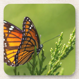 Porta-copo Borboleta de monarca alaranjada e preta