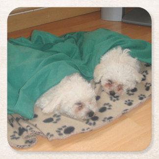 Porta-copo De Papel Quadrado 2 Sleepy_Bichon_Puppies