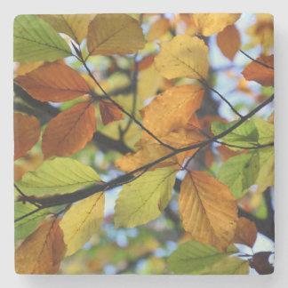 Porta-copo De Pedra Cenário colorido das folhas de outono