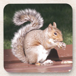 Porta-copo esquilo